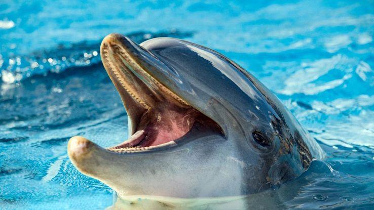 """Presto parleremo il """"delfinese"""" grazie all'intelligenza artificiale"""