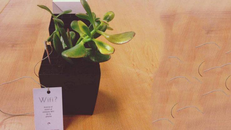 Bioo Pass, la pianta con la connessione a Internet