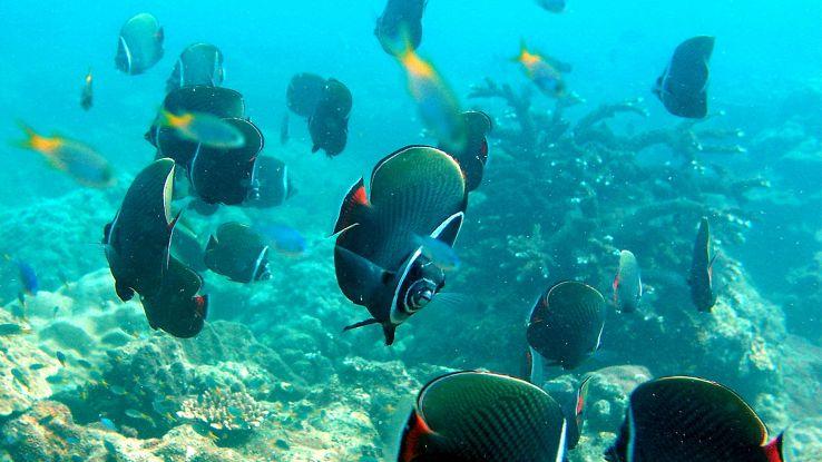 Robot-pesce fa i documentari nel mare