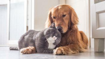 Un cane e un gatto in una stanza