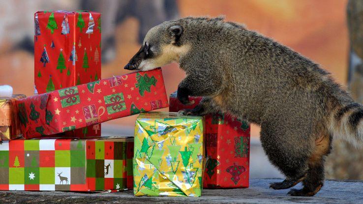 Natale: 7 utenti su 10 con regali falsi
