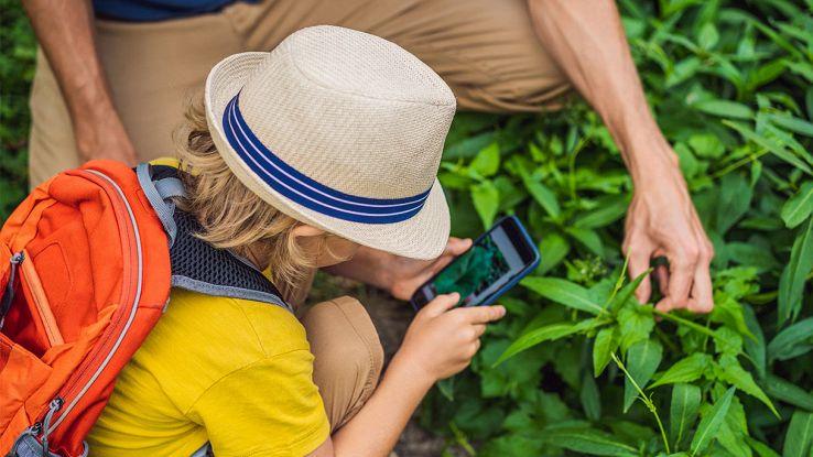 Le migliori app per il riconoscimento delle piante