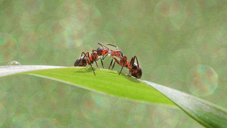 La formica che non invecchia mai nasconde un terribile segreto