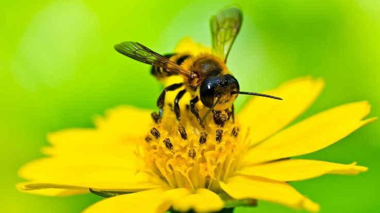 Le api sanno che ore sono grazie alla temperatura