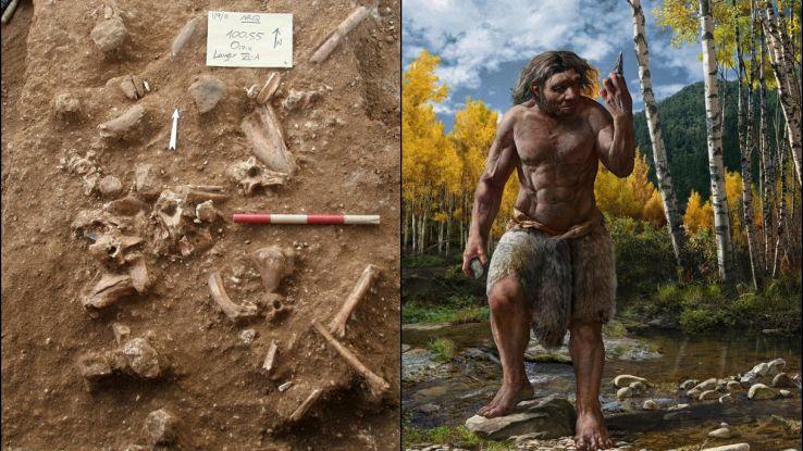Nuovi fossili riscrivono la storia dell'evoluzione