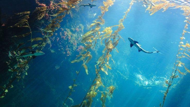 Il mondo adesso ha un quinto oceano