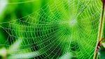La seta di ragno potrebbe rimpiazzare la plastica monouso