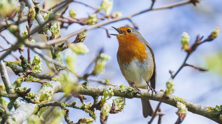 Spegnere le luci per qualche notte potrebbe salvare milioni di uccelli