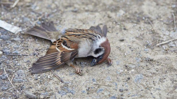 Il mistero degli uccelli caduti in volo, cosa sta succedendo in America