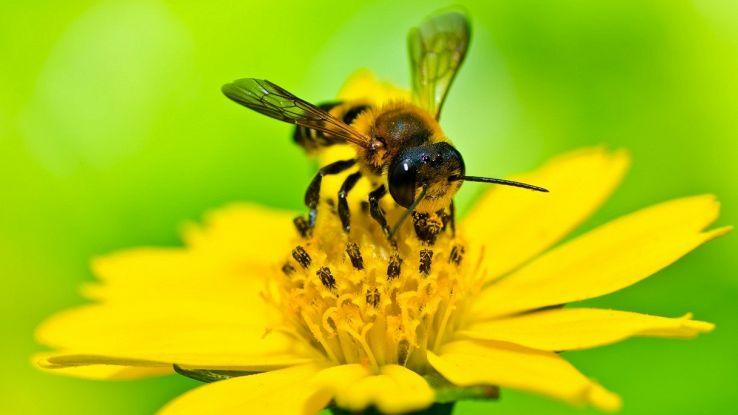 Giardini urbani per api: così la Germania vuol salvare gli insetti dall'estinzione