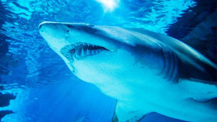 I denti di squalo che risolvono un antico mistero legato al clima