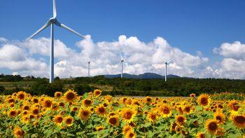 Perché dopo i disastri nucleari vengono piantati i girasoli