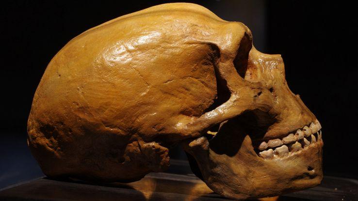 Evoluzione: DNA umano e Neanderthal