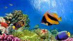 Ci restano solo 10 anni per salvare le barriere coralline: ecco come