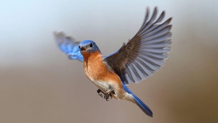 Il supersenso degli uccelli per ritrovare la strada di casa