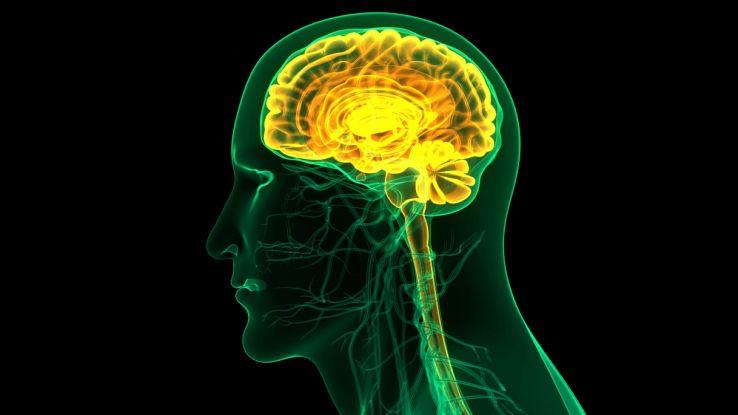 """Cervello: trovato un possibile """"elisir di giovinezza"""""""