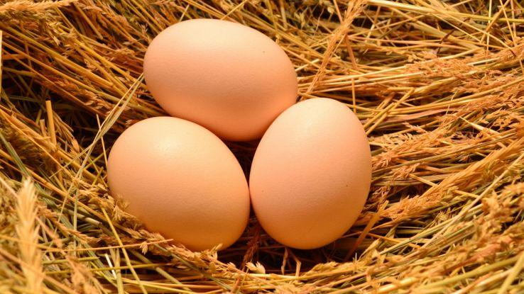 Dietro la forma di un uovo c'è un'equazione universale