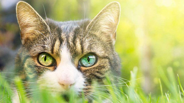 Gli 8 modi che hanno i gatti per comunicare