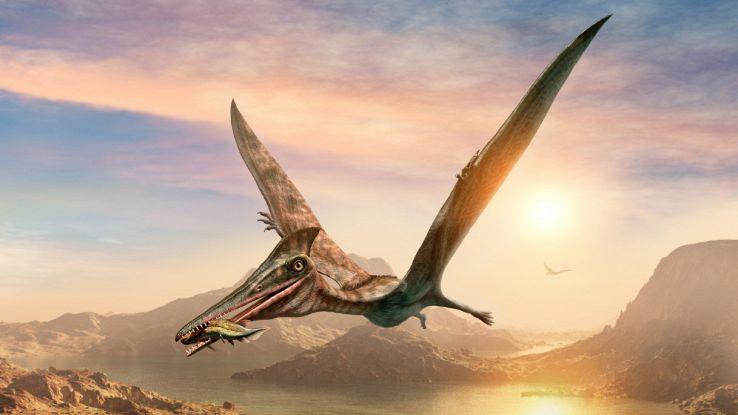"""Trovato conservato in una roccia il fossile del """"drago volante"""""""