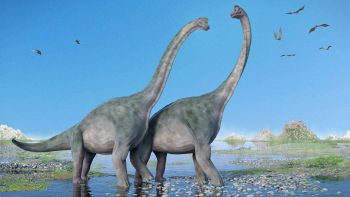 I dinosauri erano animali sociali?