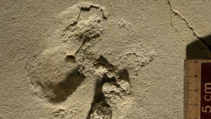 Trovate le più antiche orme di ominidi