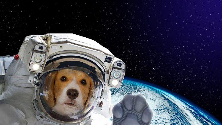 laika: il cane che andò nello spazio