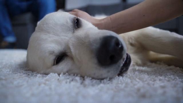 La pazza storia di Jimmy, il cucciolo 'goloso' di airpods