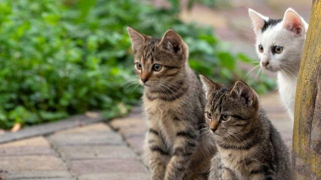 Chicago invasa dai gatti per cacciare i topi in casa