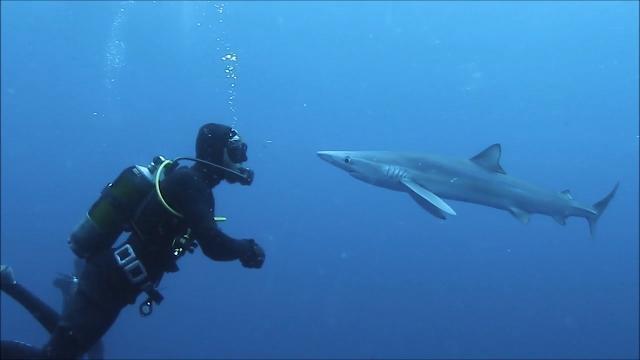 Lo squalo si avvicina al sub e accade l'incredibile