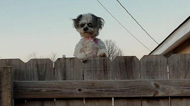 Questo cane è una nuova star del web: il motivo è 'da paura'