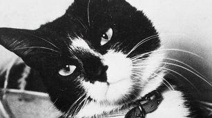 La storia del mitico Oscar, il gatto inaffondabile