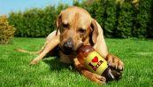 La prima birra per cani 100% italiana