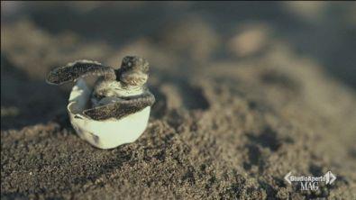 Anche la Puglia ama le tartarughe