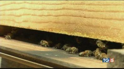 Troppo caldo, api in tilt