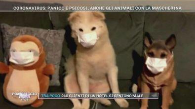 Coronavirus: Cina, animali con la mascherina