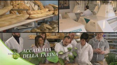 Accademia della farina