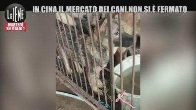 """La Cina e la carne di cane: """"Il mercato non si è mai fermato"""""""
