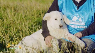 Bianca, una cucciola di 4 mesi