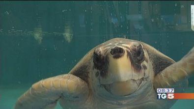 Il più grande centro di recupero per tartarughe marine del Mediterraneo