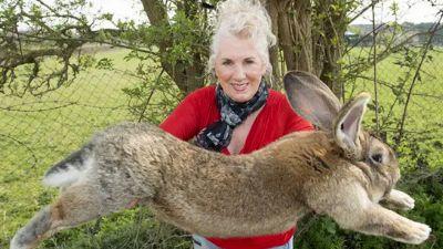 Darius, la storia del coniglio gigante rapito
