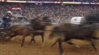 Un toro all'attacco