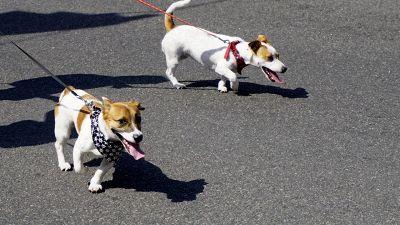 Cani, come tutelarli dall'asfalto rovente