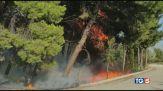 A Pescara rogo doloso, la costa brucia ancora