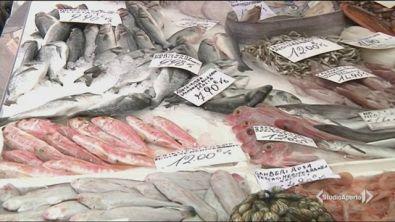 Non c'è più pesce in Europa