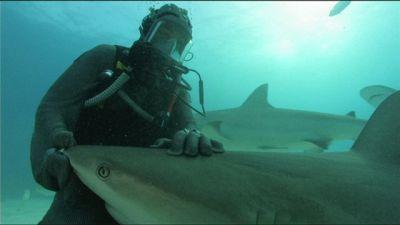 Ballando con gli squali