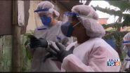Picchi di contagi in Brasile e India