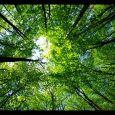 Passeggiate nei boschi