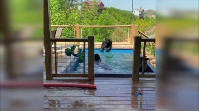 Casa vacanze con ospite: ecco chi sguazza in piscina