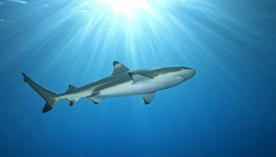 In Liguria è stato avvistato uno squalo di 5 metri