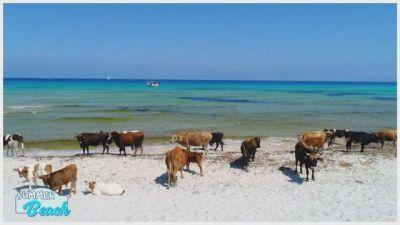 Attraverso la Corsica, alla scoperta dell'isola della Giraglia, Saint Florent e Desert des Agriates